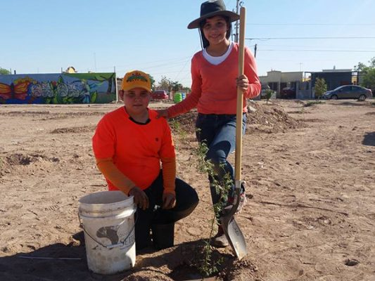 Plantan más de 20 árboles en Drenes de Mexicali con apoyo comunitario