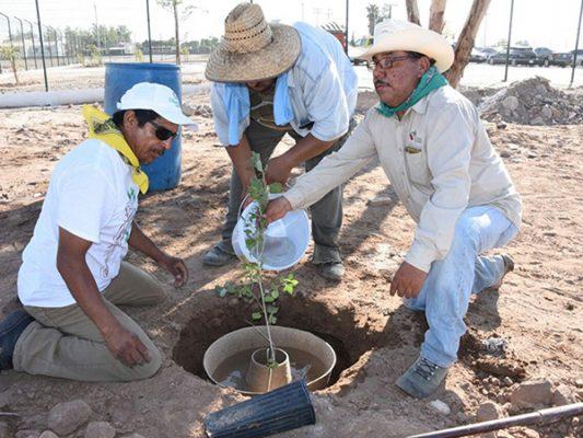 Celebran Día del Árbol con rehabilitación de lote baldío
