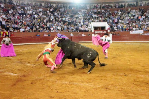 VIDEO Torero sufre aparatosa cornada en SLP