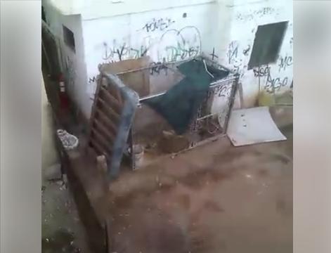 León es oculto en residencia abandonada en Valle de Puebla