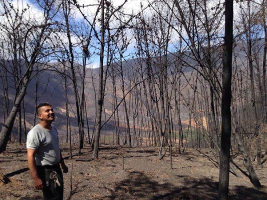 Crece bosque de pinos tras fuerte incendio que consumió su población