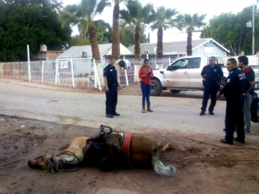 Muere yegua electrocutada en el poblado Compuertas