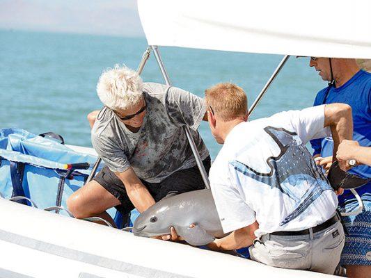 Ubican primera vaquita marina