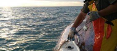 A pesar de la prohibición, caen tres pescadores por captura de camarón en SF