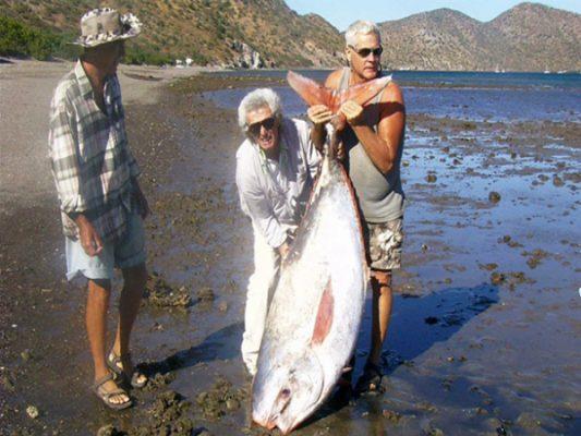 Encuentran varado raro ejemplar de pez