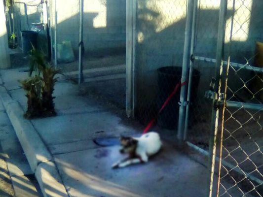 Control Animal solo realiza inspecciones en denuncias formales