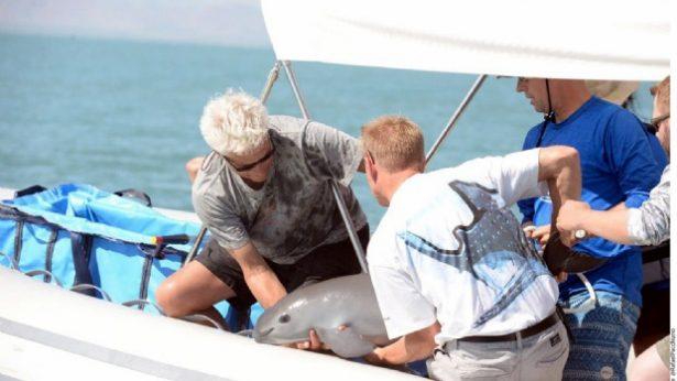 Persiste pesca furtiva en polígono de vaquita
