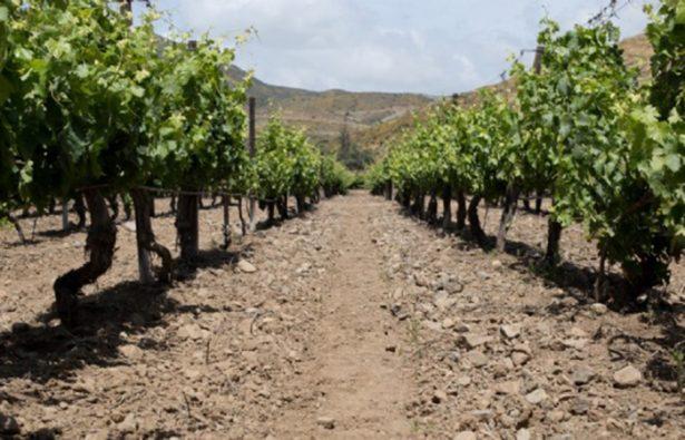 En riesgo agua para Valle de Guadalupe