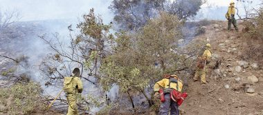 Controlan incendio forestal en Tijuana