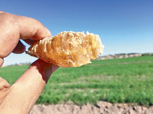 Mexicali, mayor productor de miel en BC