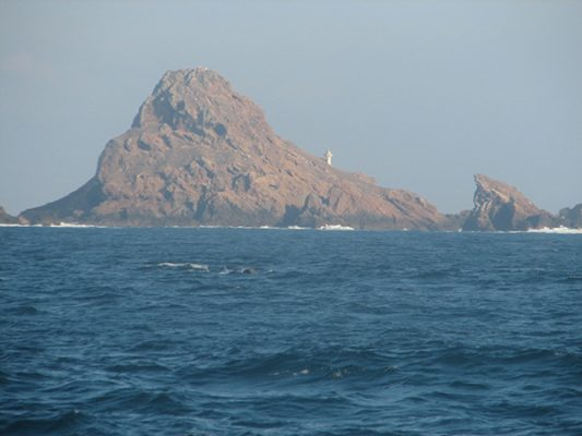 Temporada del avistamiento de la ballena gris en Ensenada