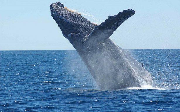 Ballenas dan luz al mar mexicano