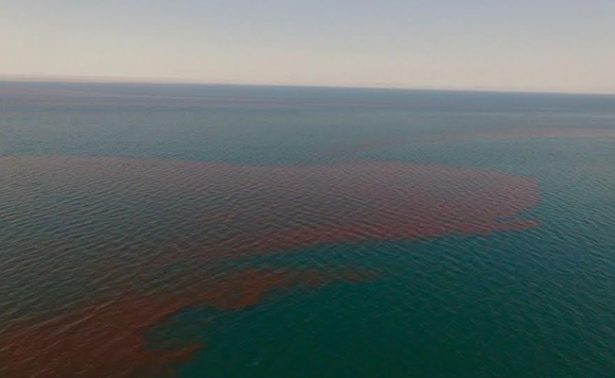 Detectan extraña mancha roja de 80 km en aguas del Pacífico