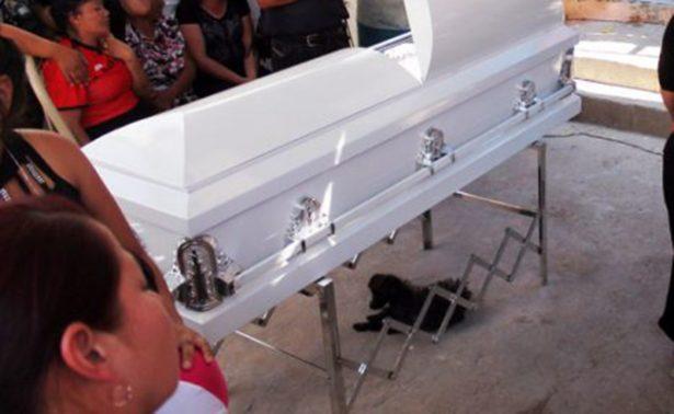 Perritos velan a niñas asesinadas en Chihuahua