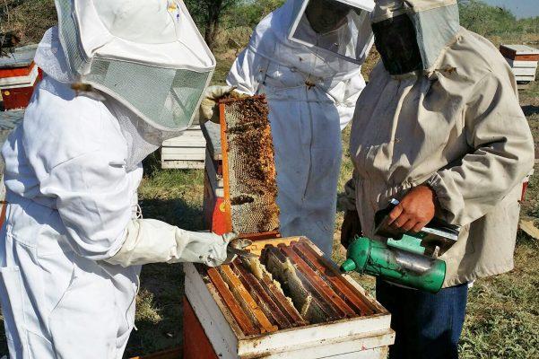 Registra SAGARPA baja del 30 % en producción de miel en el 2016