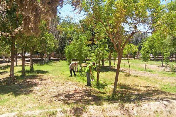 En breve se plantar n 300 rboles frutales en el vivero for Viveros de arboles frutales en chihuahua