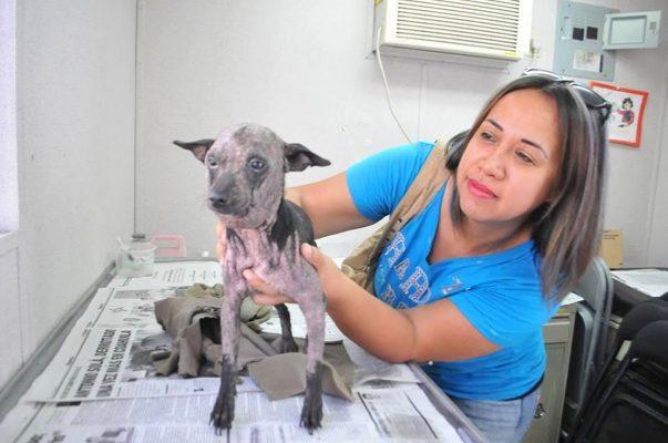 j11 cuidado de mascotas 2