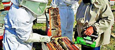 Ataque de abejas deja seis lesionados graves