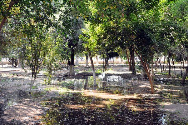 Vivero Forestal lerdense recibe riego con agua rodada de las presas