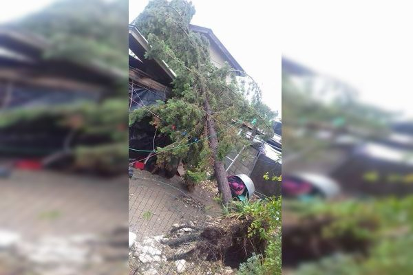 Fuertes vientos dejan 5 lesionados y derriban árboles