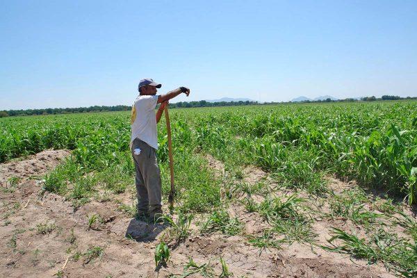 En Lerdo festejarán el 81 aniversario del Reparto Agrario