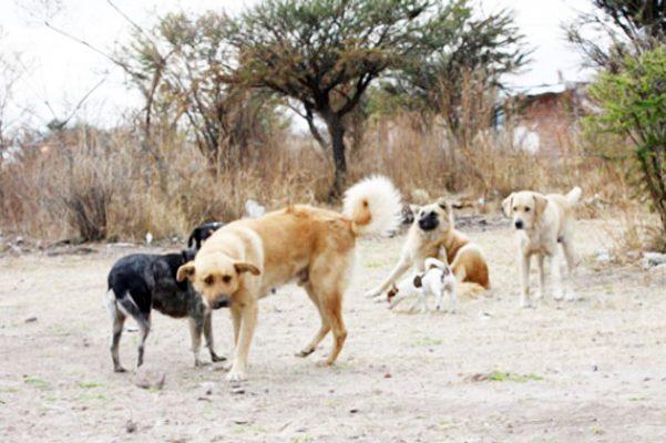 Exhortan al trabajo conjunto para abatir perros infectados