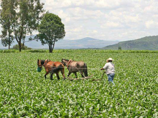Pese a la Reforma Agraria, sigue la incertidumbre jurídica