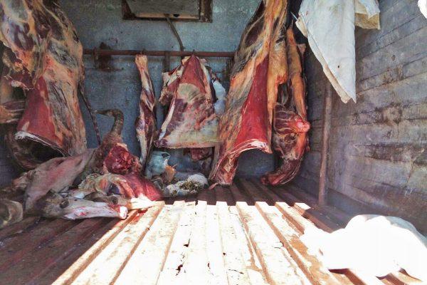 Asegura Fuerza Coahuila vehículo con carne insalubre