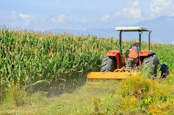 Incrementará México 27.8% producción agrícola gracias a planeación estratégica de Sagarpa