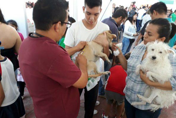 Mascotas de todo tipo fueron tratadas con cariño tras celebrarse el Día del Perro el domingo pasado.