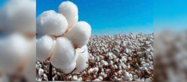 SAGARPA certifica a empresas despepitadoras de algodón