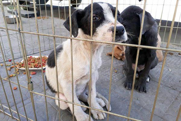 Se distinguió la administración monclovense por el cuidado de las mascotas
