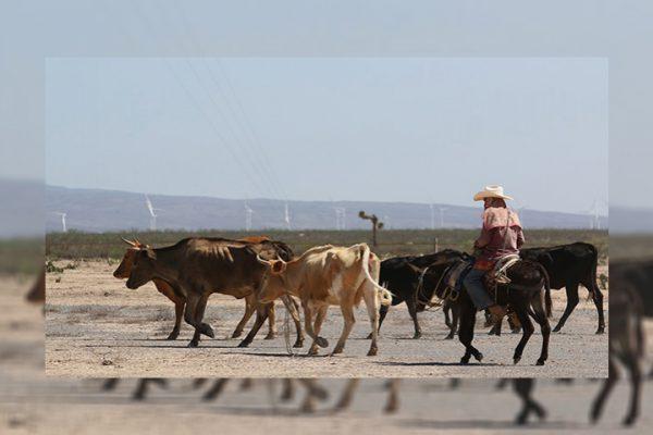 Sin afectaciones a ganadería y agricultura por el frío