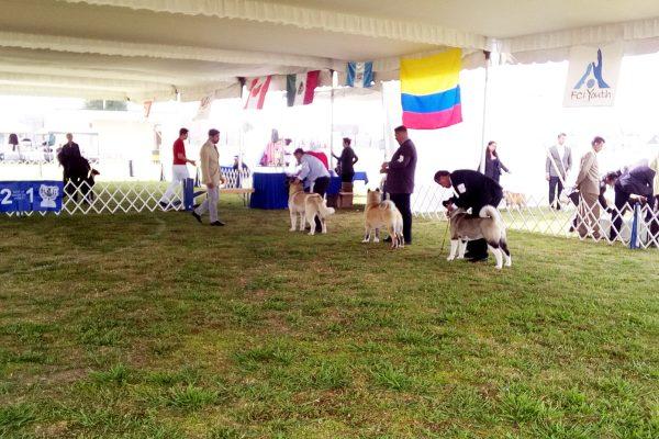 Invitan a la V Exposición Nacional Canina