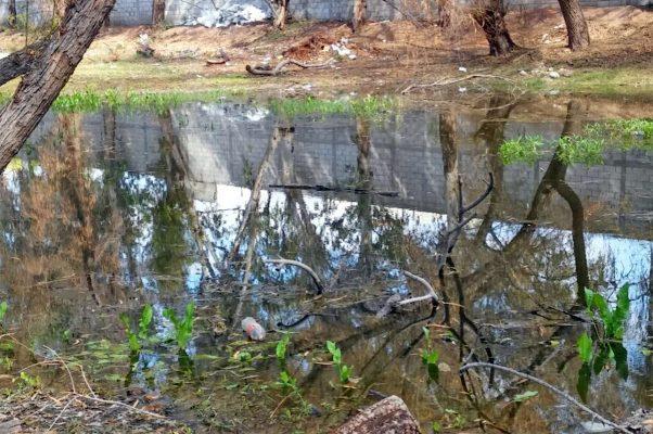 El olor del lago se ha convertido en una incomodidad para los usuarios del bosque.