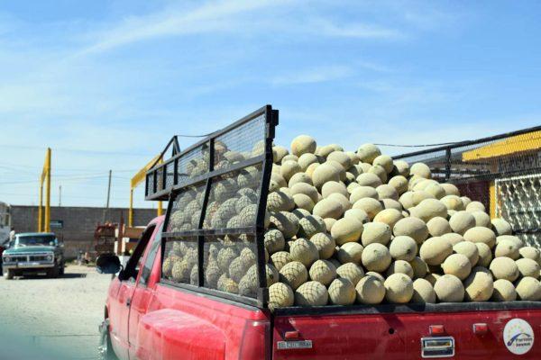 Los productores de melón recibirán todo el respaldo de parte de las autoridades.