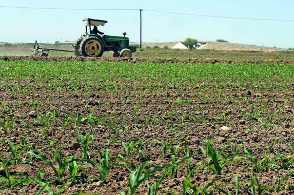 Sector agropecuario, coartado por reformas fallidas