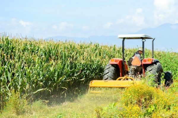 La producción agrícola se podría ver afectada en el país, de no bajar los insumos que el sector utiliza.