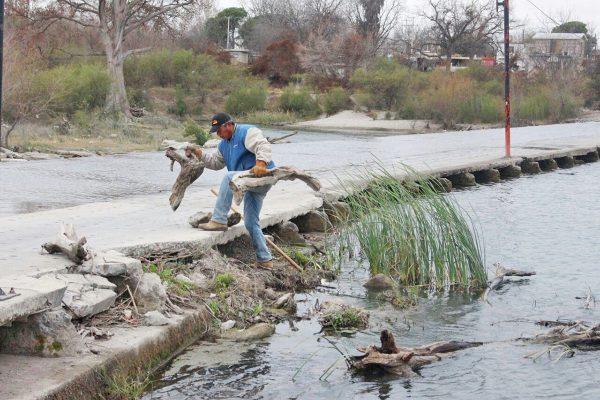 Dan mantenimiento al Río Sabinas