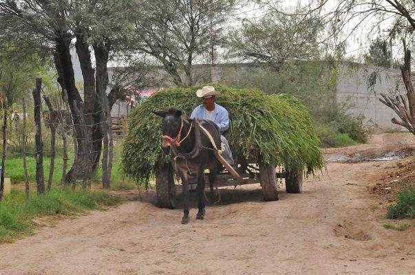 Productores de alfalfa ya sembraron sus tierras con agua de estiaje