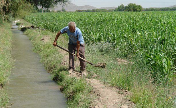 Chihuahua cuarto lugar en producción de alimentos del campo