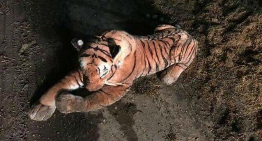 Realizan operativo policíaco para atrapar a un tigre… ¡de peluche!