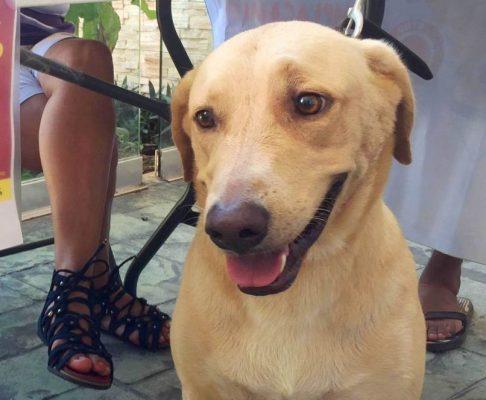 Anuncian jornada de esterilización de mascotas