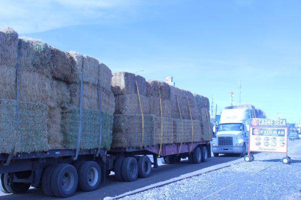 MUCHOS tráileres y tractocamiones cargados de forraje cruzan Ahumada rumbo al sur del estado.