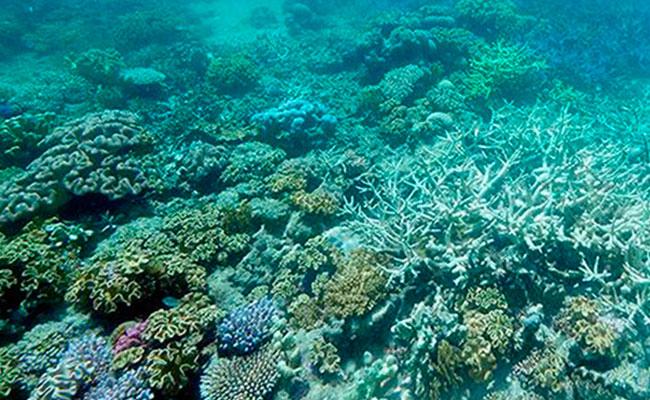 ¡Sorprendente! Descubren que los corales pueden predecir erupción de volcán marino