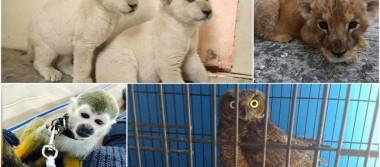 Lucran con animales exóticos vía Facebook en Guanajuato