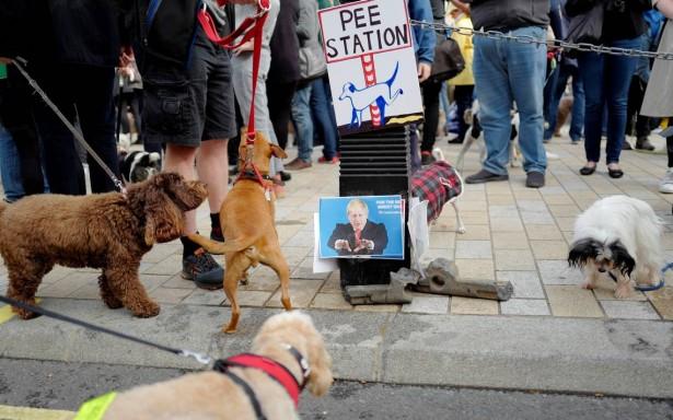 Ladridos de protesta: perros se manifiestan en Londres contra el Brexit