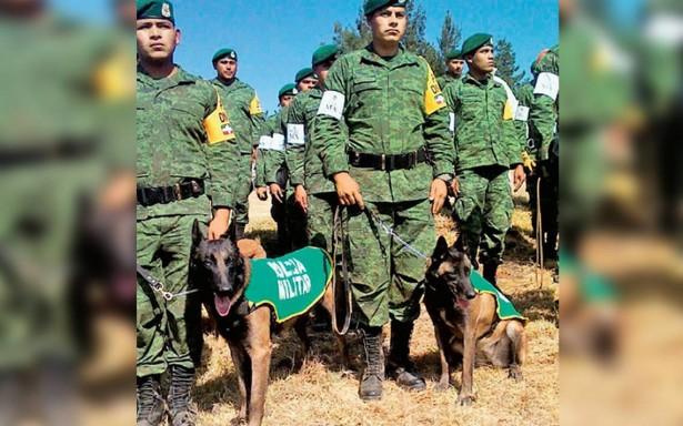 Más de mil caninos apoyan a Ejército para cumplir su labor