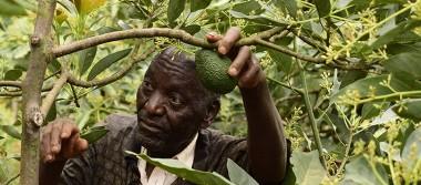 Kenia aprovecha la tostada con aguacate