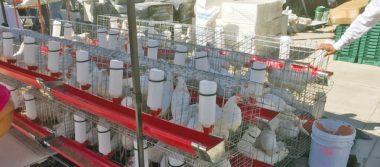 Entrega Sagarpa paquetes de gallinas y huertos familiares